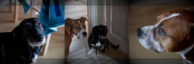 Anton och Bobbo